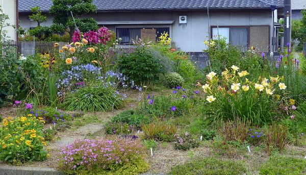 小さな花畑の紹介
