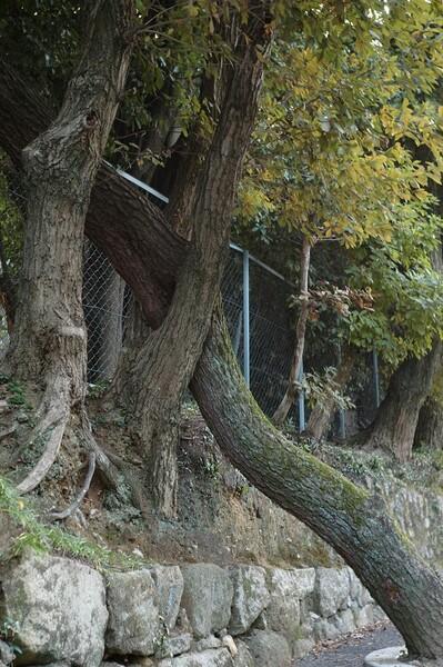 【木】木々の事情