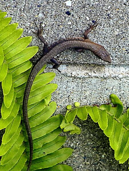 【生き物景色】爬虫類