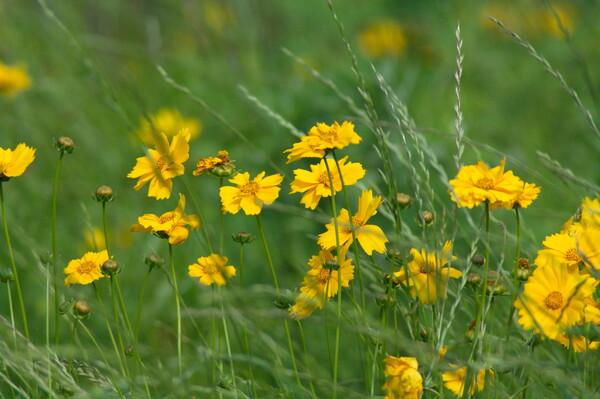 鉄道沿線に咲く花たち
