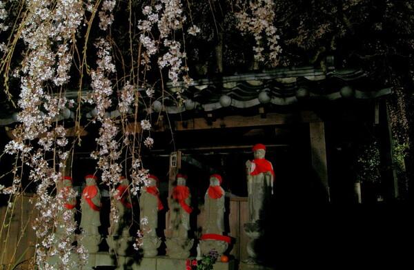 【12392】地蔵と夜桜(レタッチ)