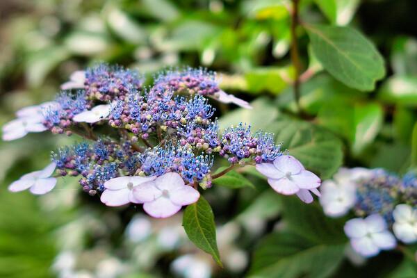 【生活の色】今日の花