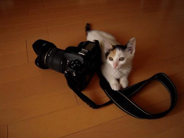 ネコにカメラ