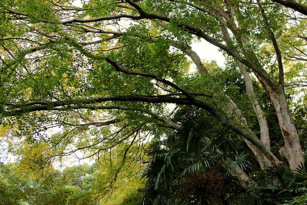 モミジのある大樹森