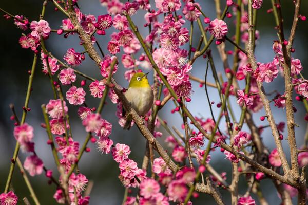 早すぎる春を喜ぶ