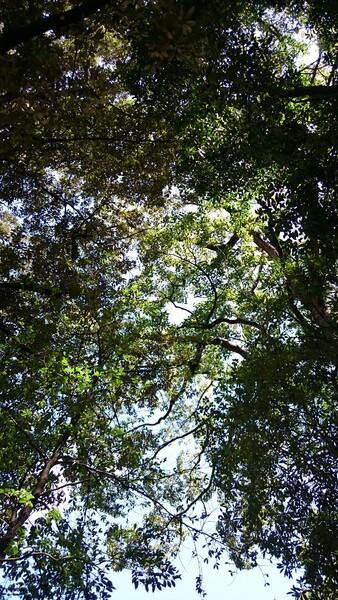 キラキラ美しい感田の緑