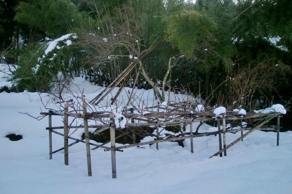 孟宗竹を伐採