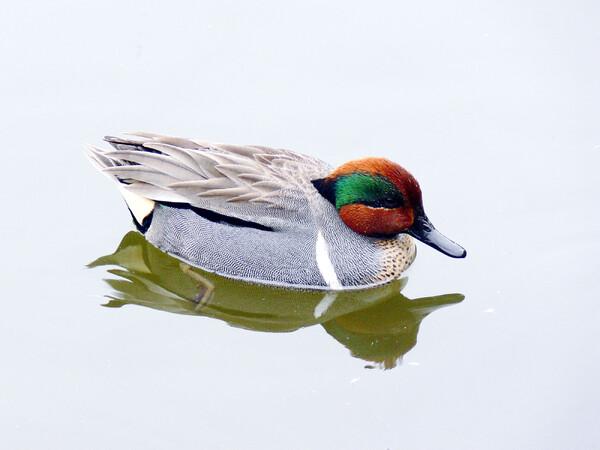 【緑】迷鳥