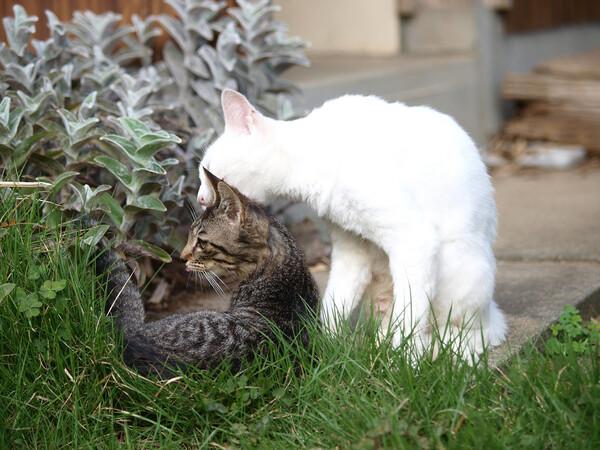 【猫】の親子