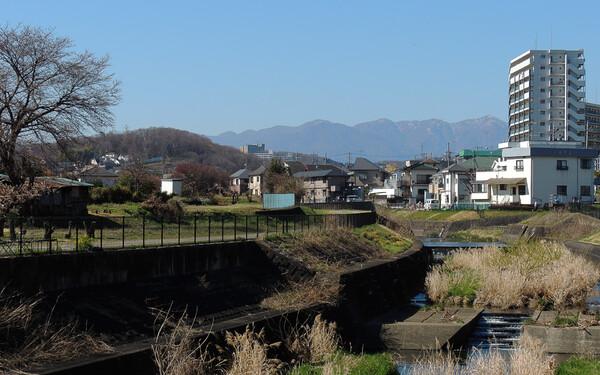 川沿いの一本桜