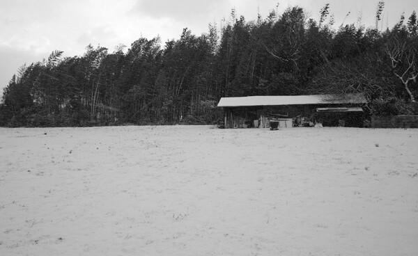 【白黒写真】 雪の朝