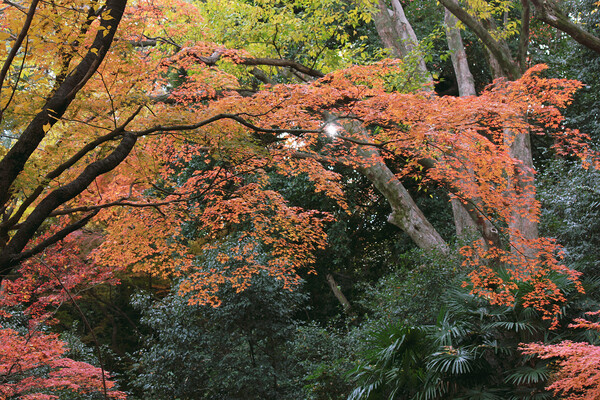 大樹の森、晩秋にして