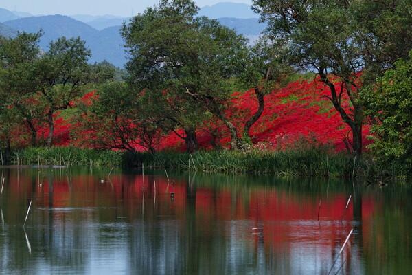 川のほとりの赤