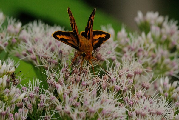 蝶の触角など