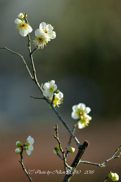 春の足踏み
