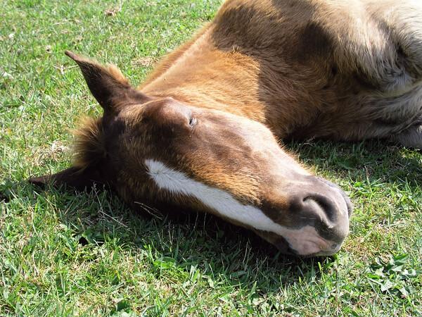 【やすらぎ】寒立馬