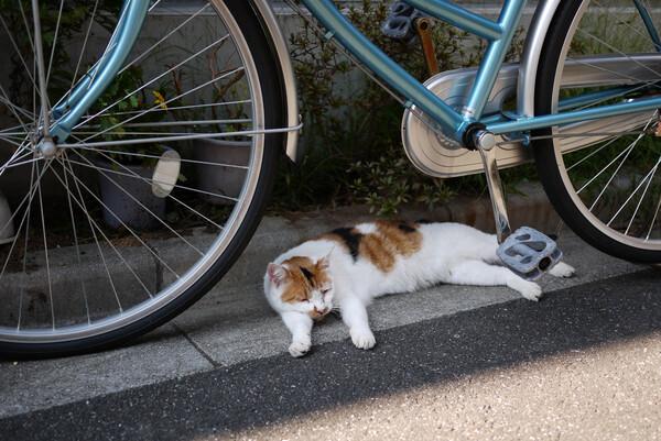 疲れたにぁ〜