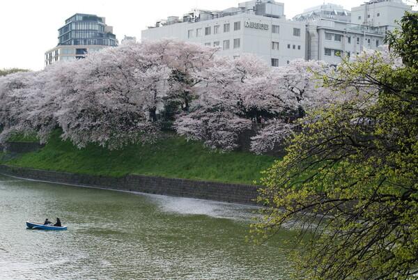 『緑』桜と新緑と