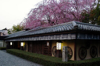 桜の下で湯豆腐
