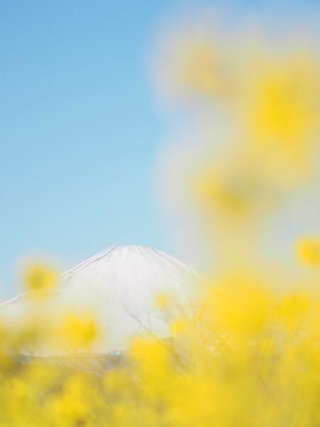 立ち昇る春