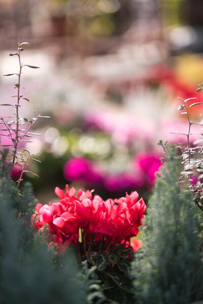 「年末に」赤い花