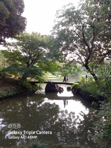 池に映る親子