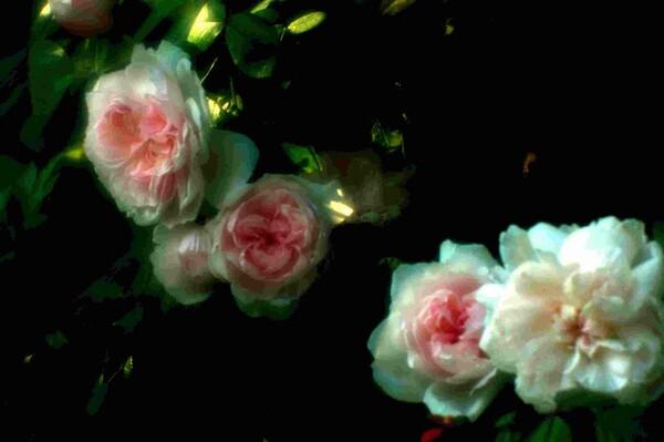 【この色 好き!】春の花#16