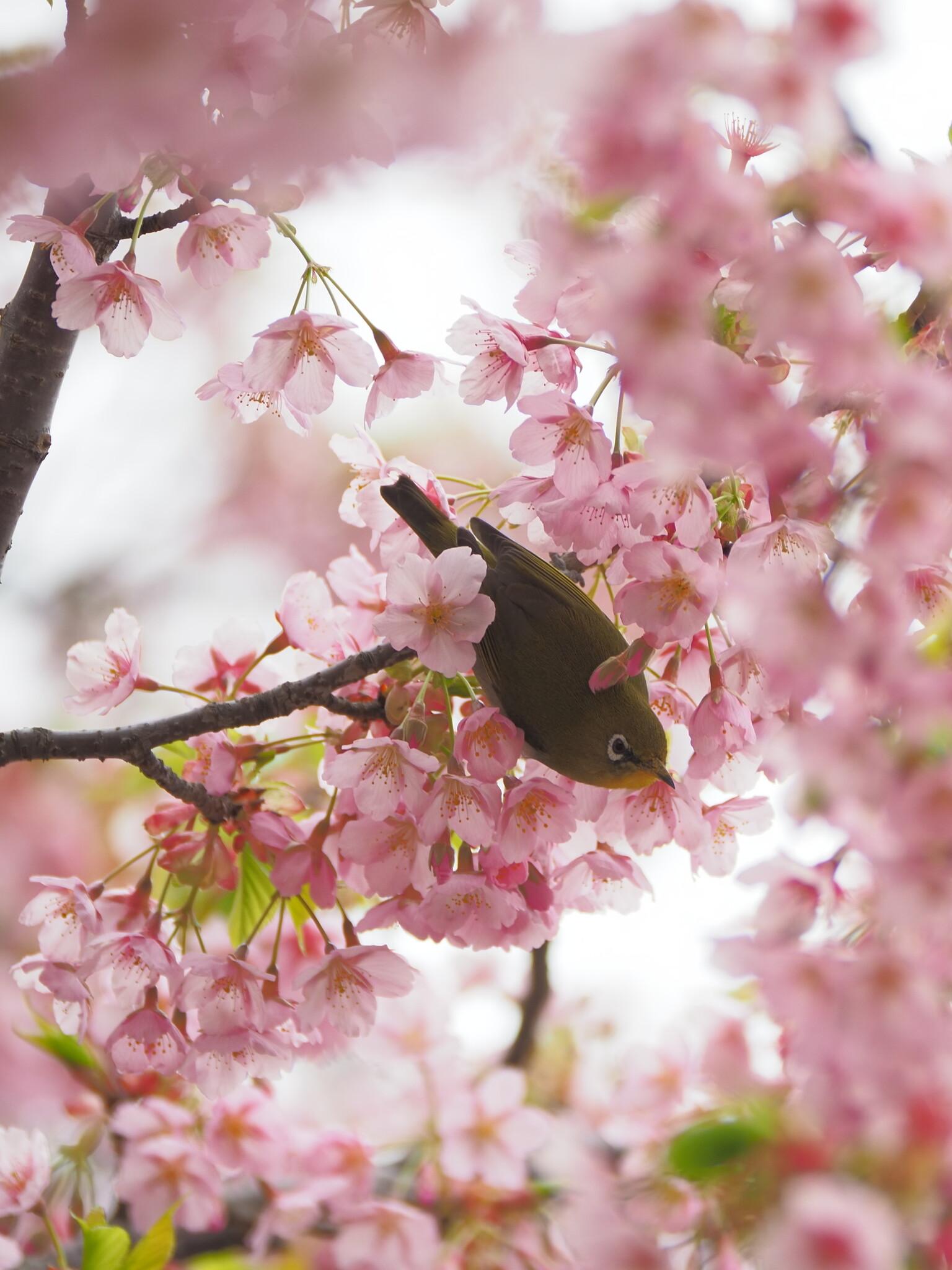 春が渦巻く