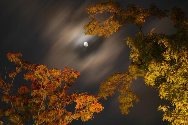 【木】月と眺める紅葉