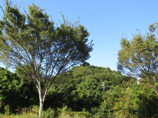 秋の森林緑が一杯