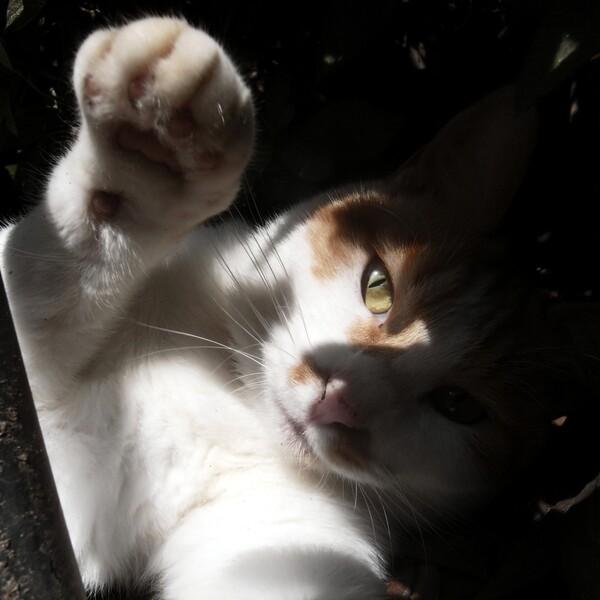 猫パンチ・・