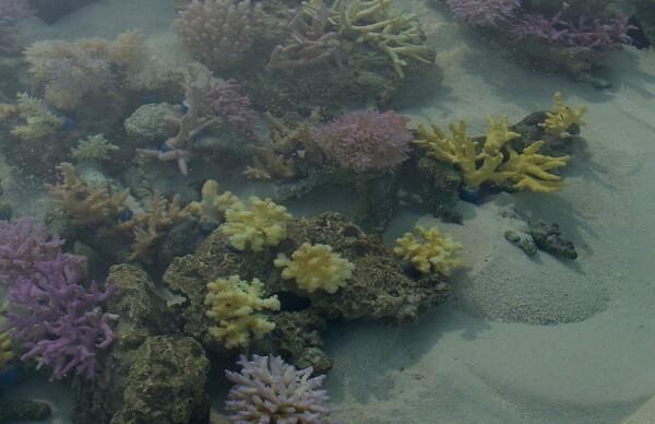 六本木ヒルズ屋上のサンゴ